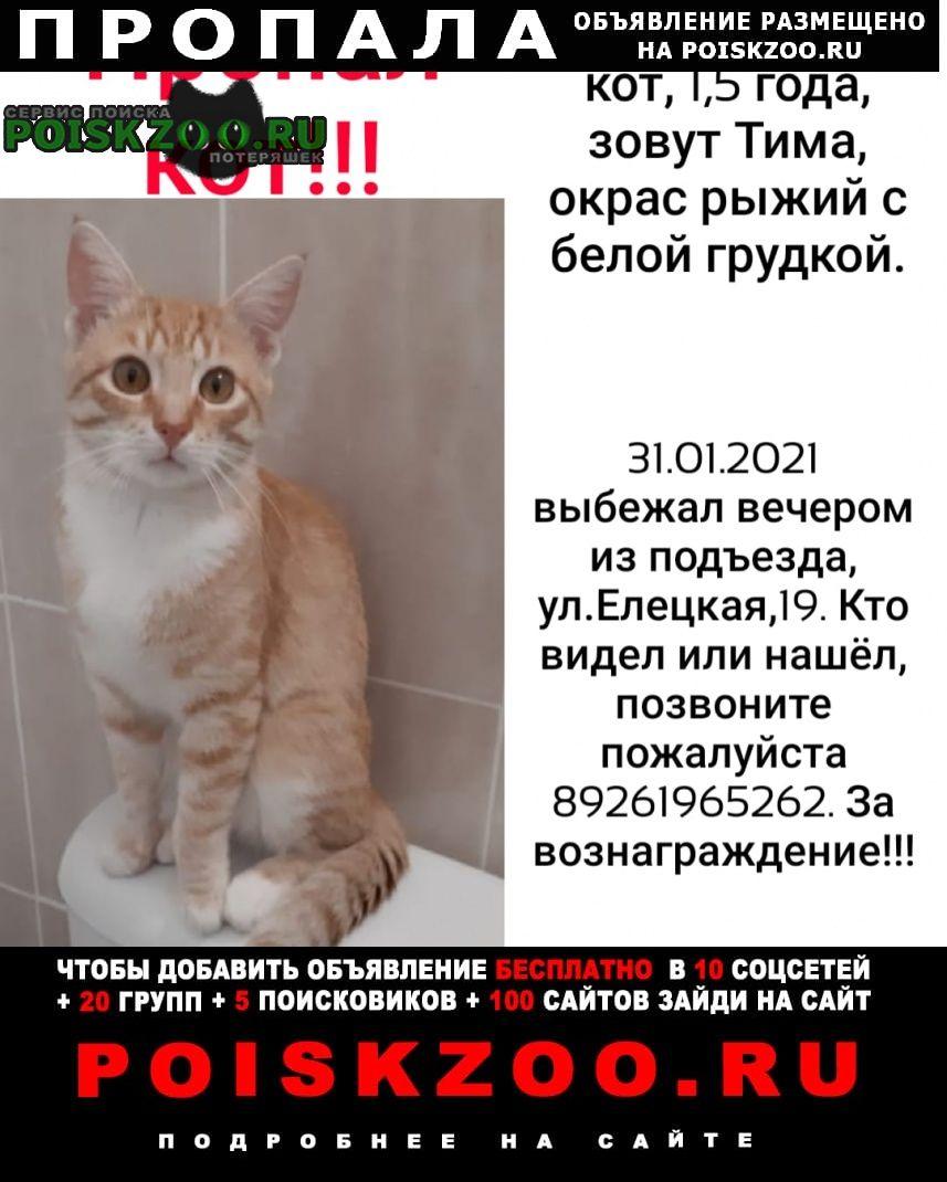 Пропала кошка. Москва