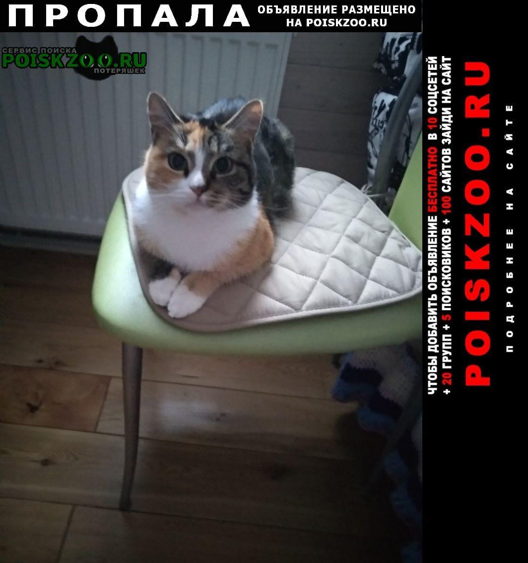 Кашира Пропала кошка срочно