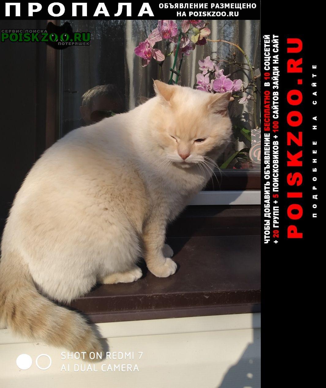 Пропал кот британской породы беляш Воронеж