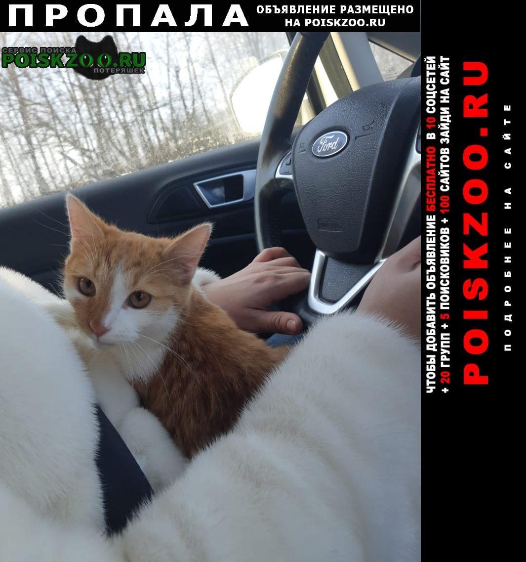 Пропала кошка Липецк