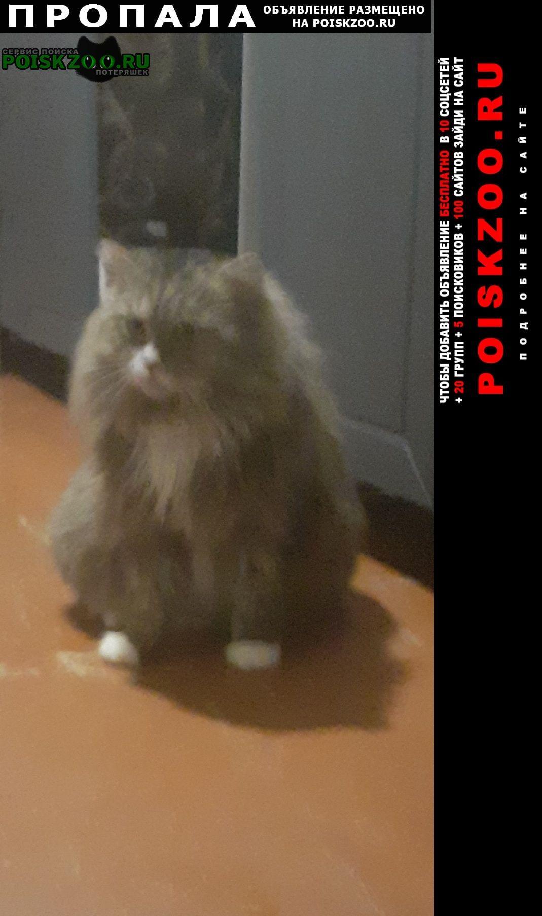 Дубна (Тульская обл.) Пропала кошка кот