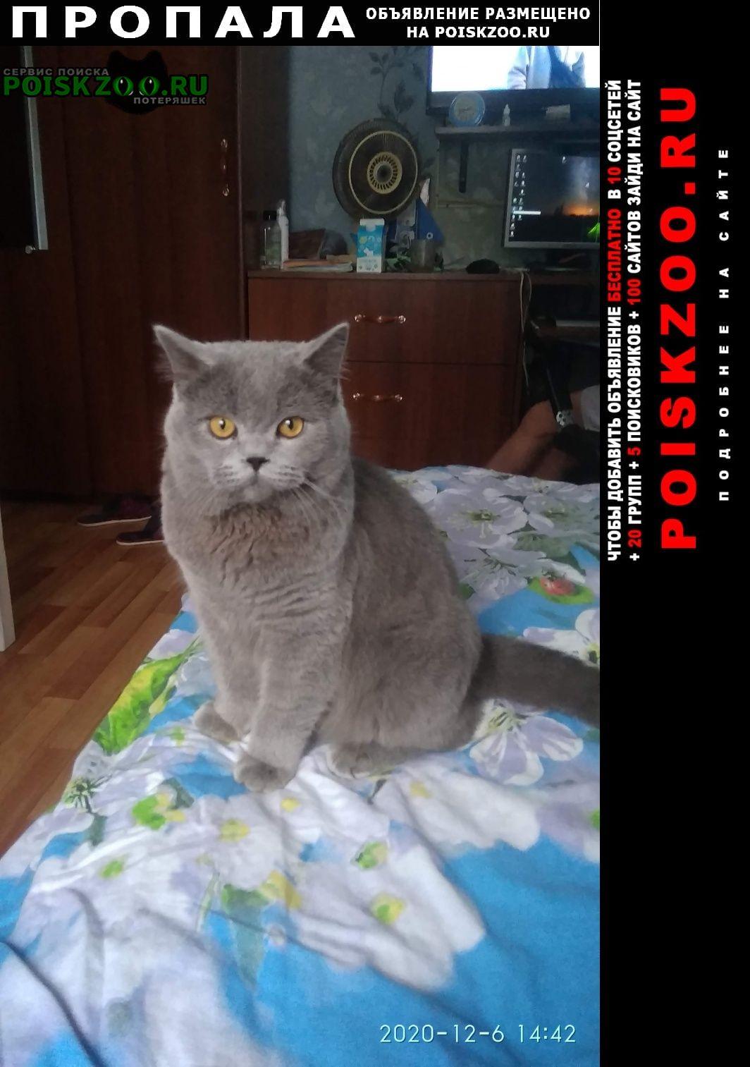 Пропала кошка британский кот Томск