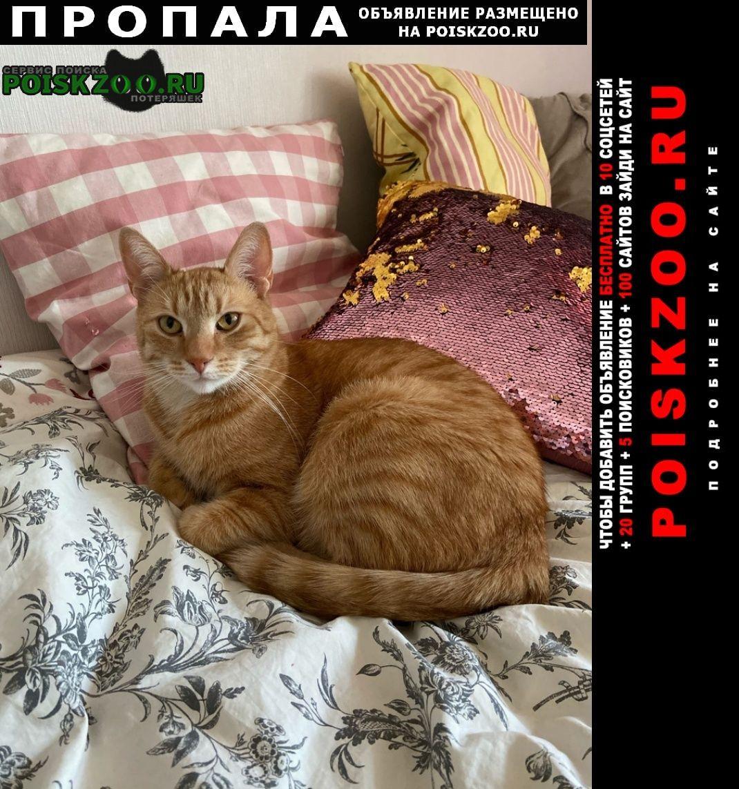 Санкт-Петербург Пропала кошка рыжий кот