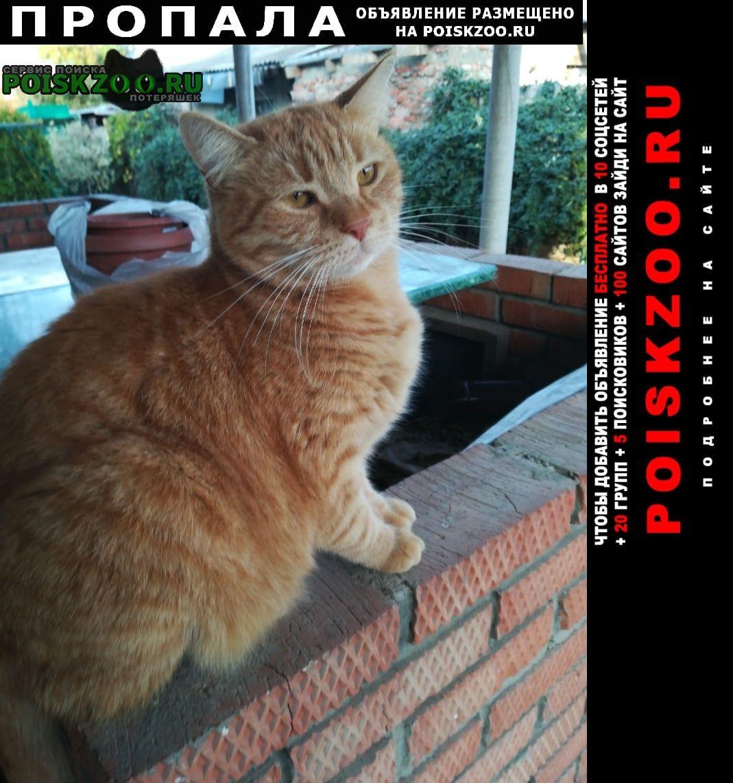 Краснодар Пропала кошка рыжий котик