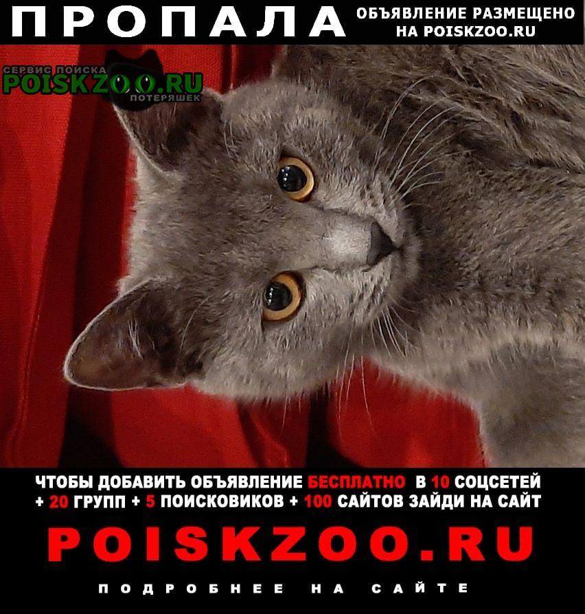 Пропала кошка востряково Домодедово