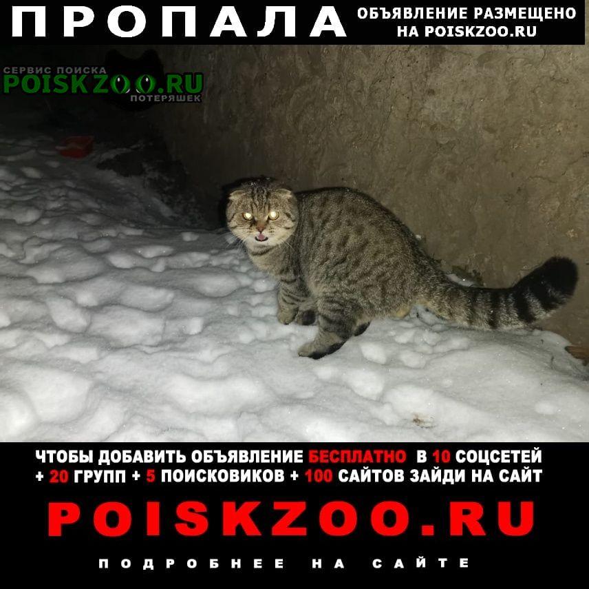 Пропал кот ищу Рязань