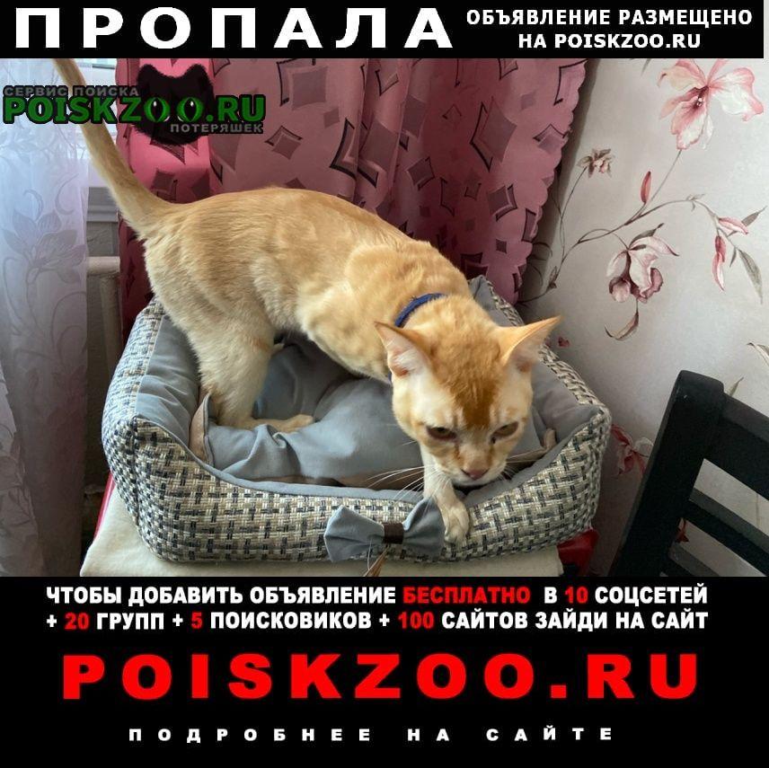 Пропал кот рыжий бостон, 2 года Солнечногорск