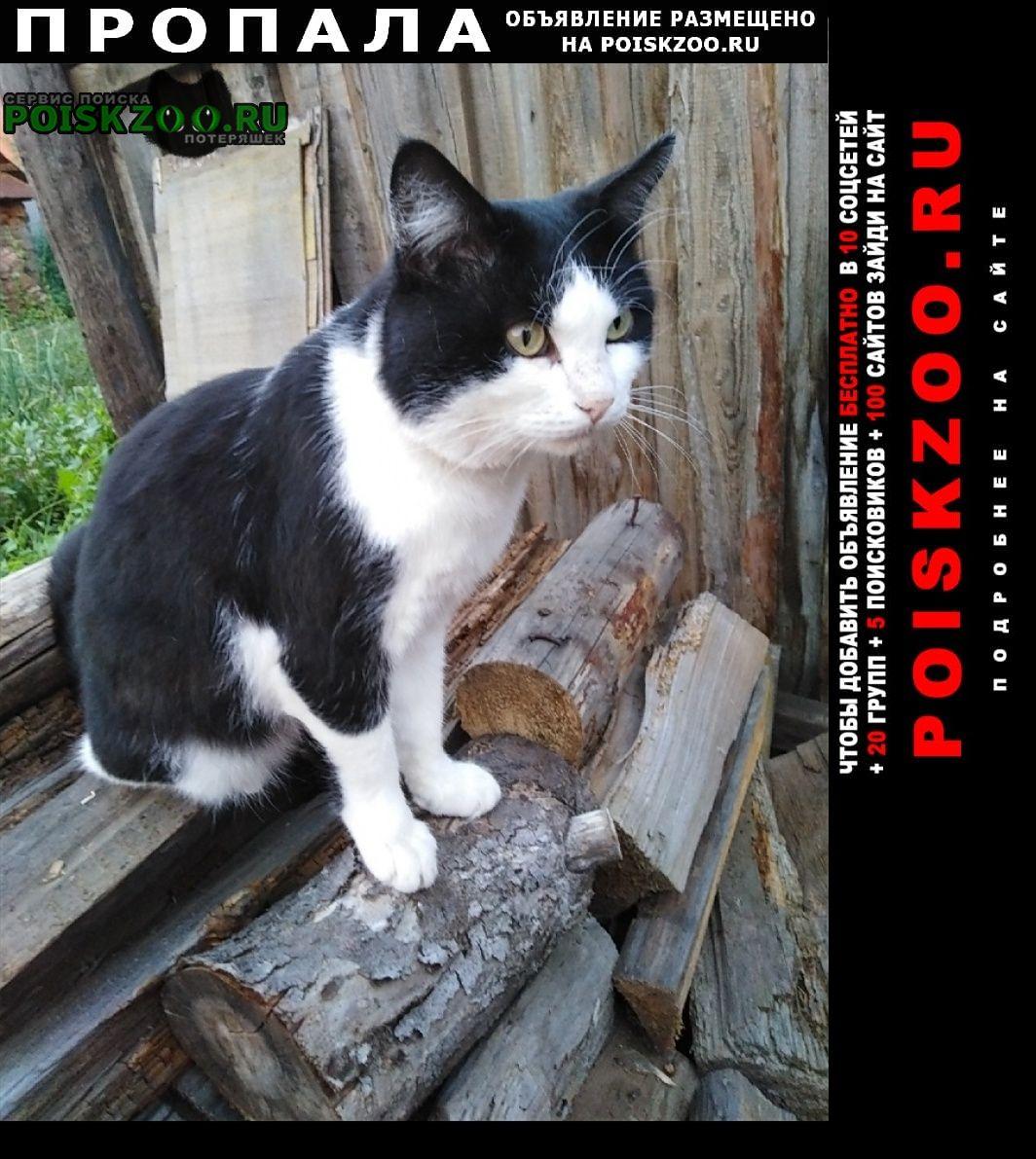 Сарапул Пропала кошка кот