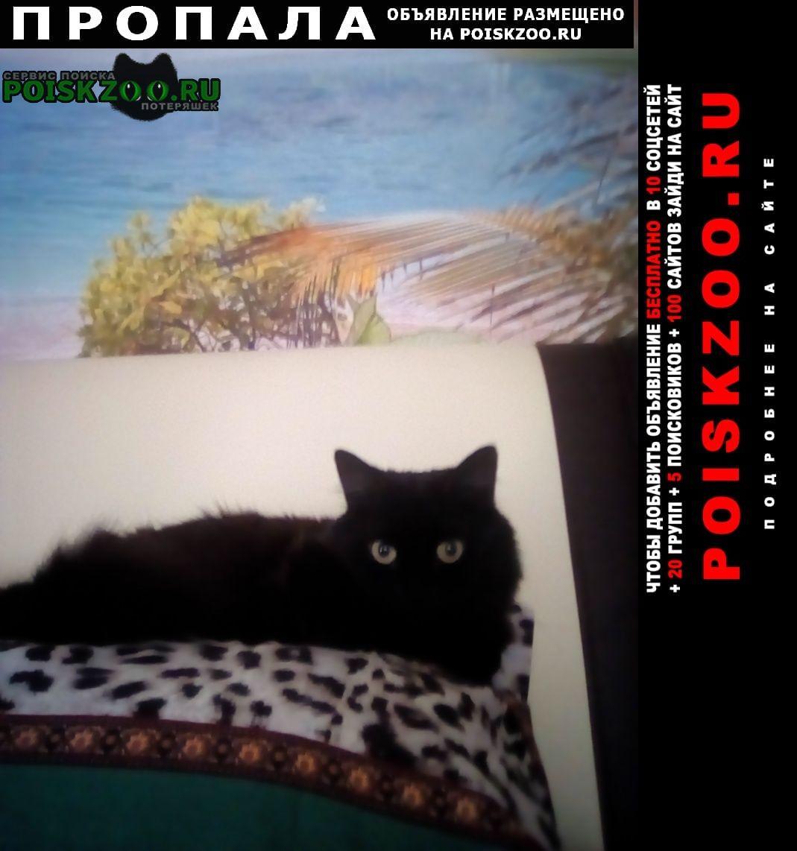 Пропала кошка чёрная Геленджик