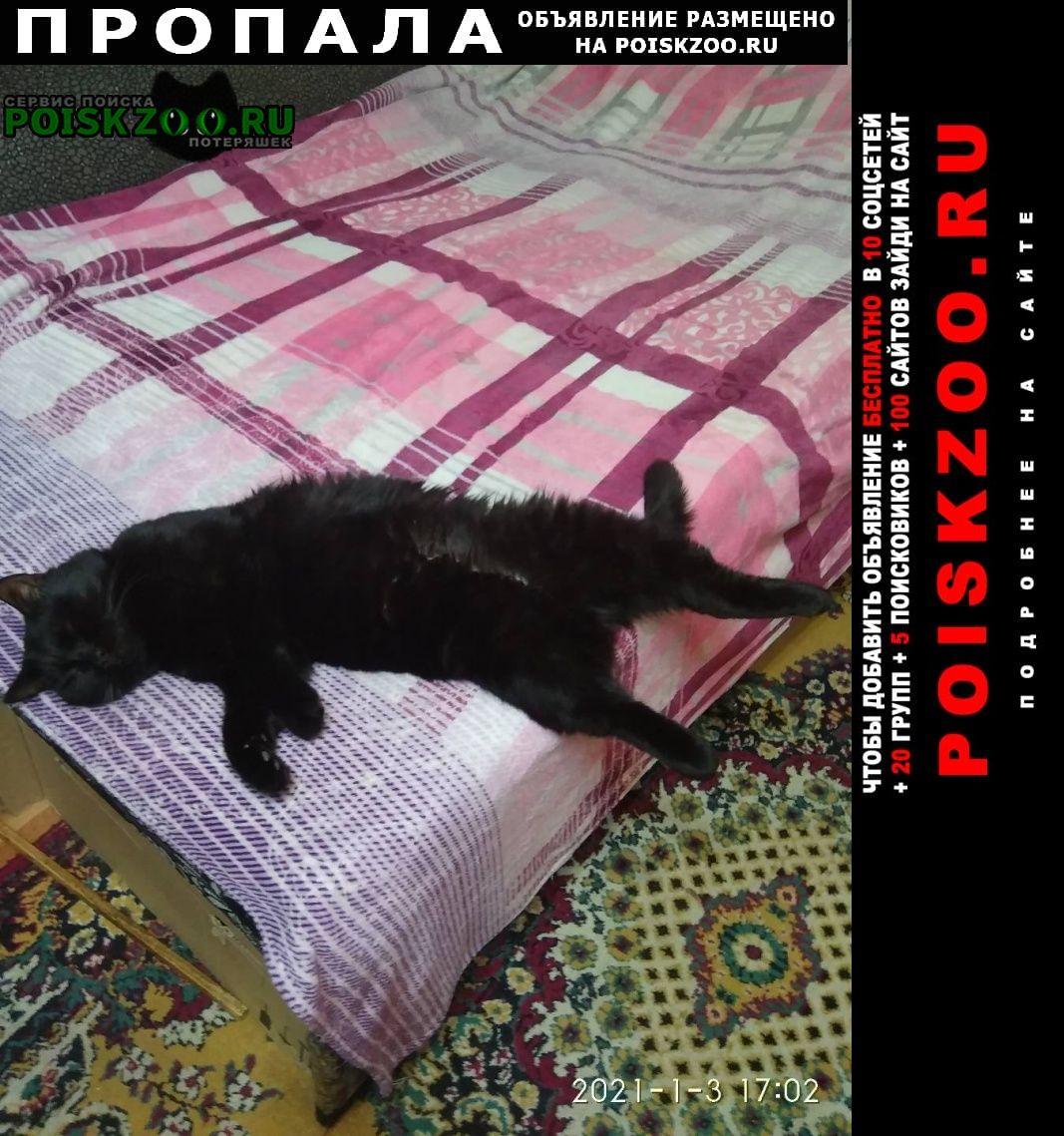 Пропал кот чёрный.кличка тёма.год и 11 мес. Шахты