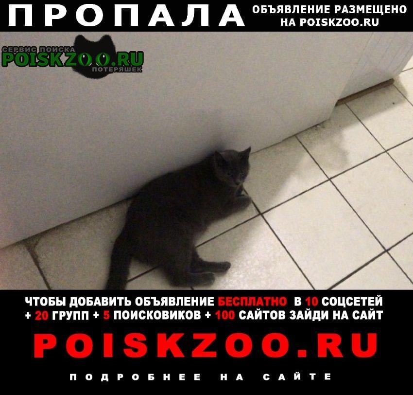 Пропала кошка Геленджик