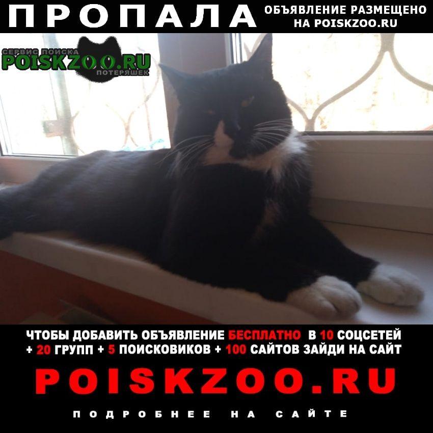 Пропала кошка кот черно-белый смокинг Ангарск