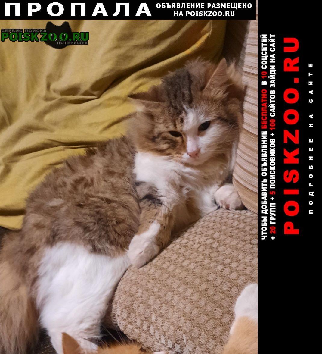 Верхняя Пышма Пропала кошка кот.