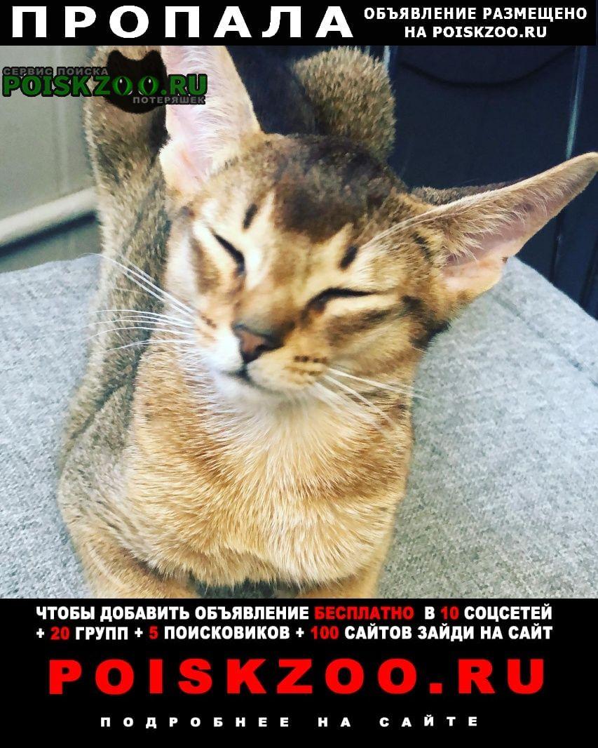 Москва Пропала кошка котенок бажова д 6 -.