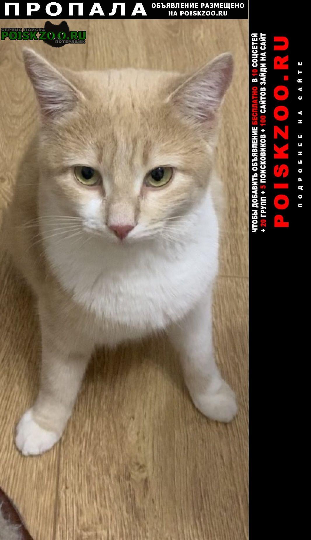 Пропала кошка маша Ставрополь
