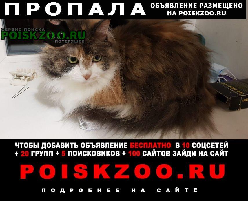 Пропала кошка потерялась - взрослая пушистая, тр Санкт-Петербург