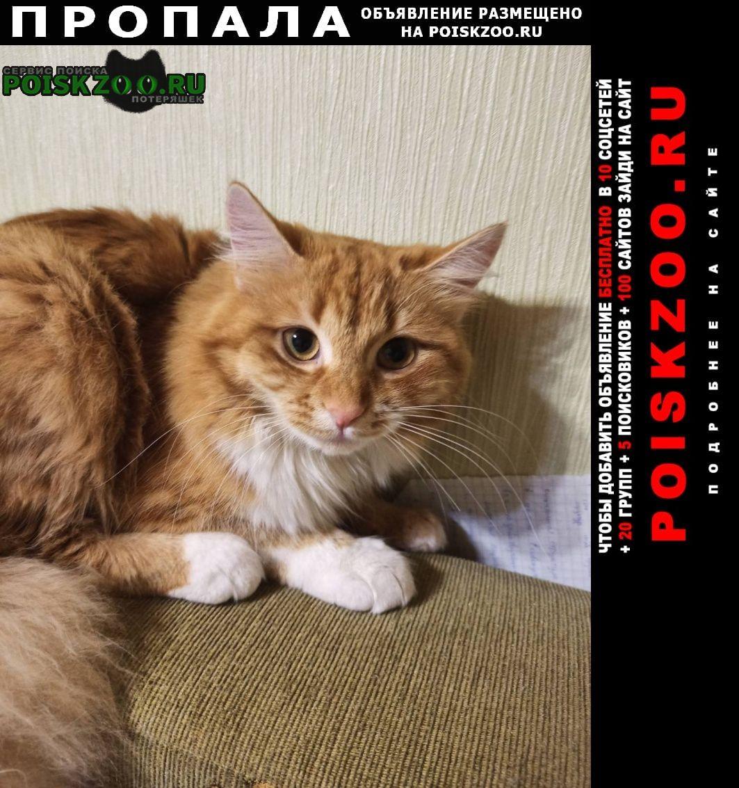 Пропала кошка помогите найти Севастополь