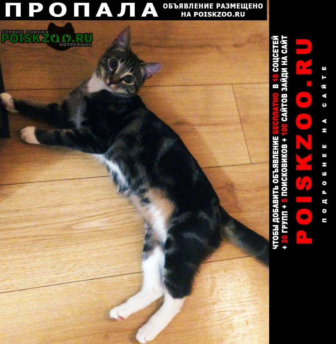 Пропала кошка молоденькая кошечка, кличка эмили Санкт-Петербург