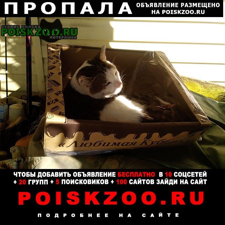 Архипо-Осиповка Пропала кошка кот