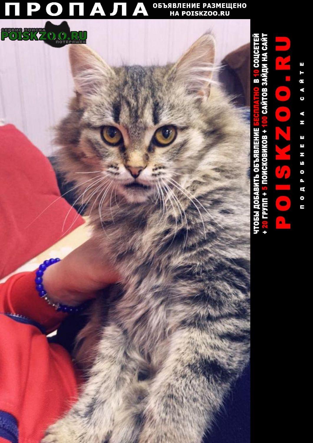Пропала кошка помогите найти Звенигород