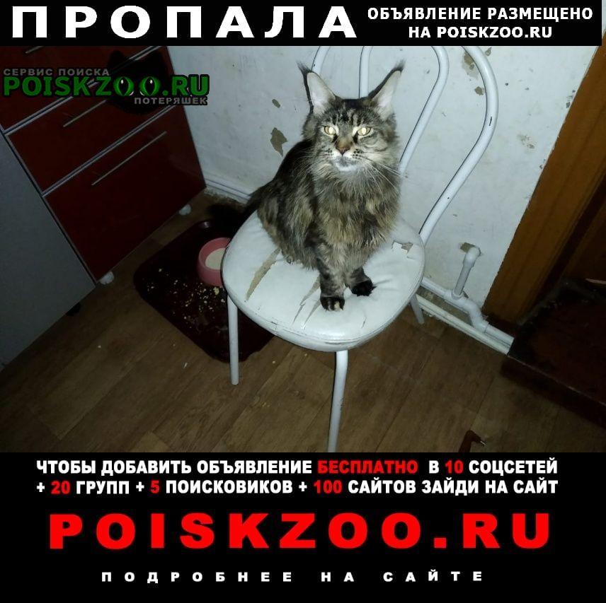 Томск Пропала кошка