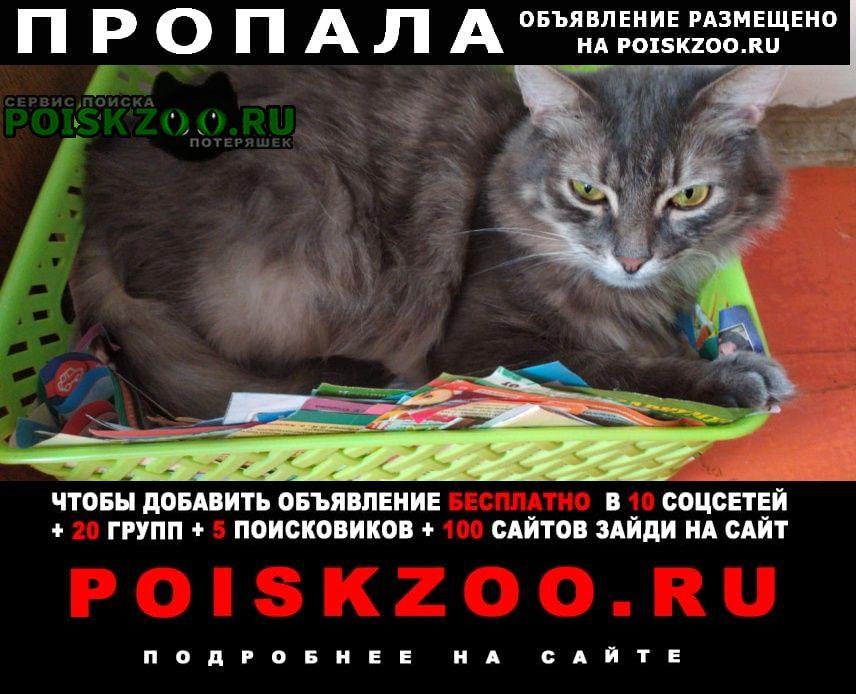 Пропала кошка кот Мценск