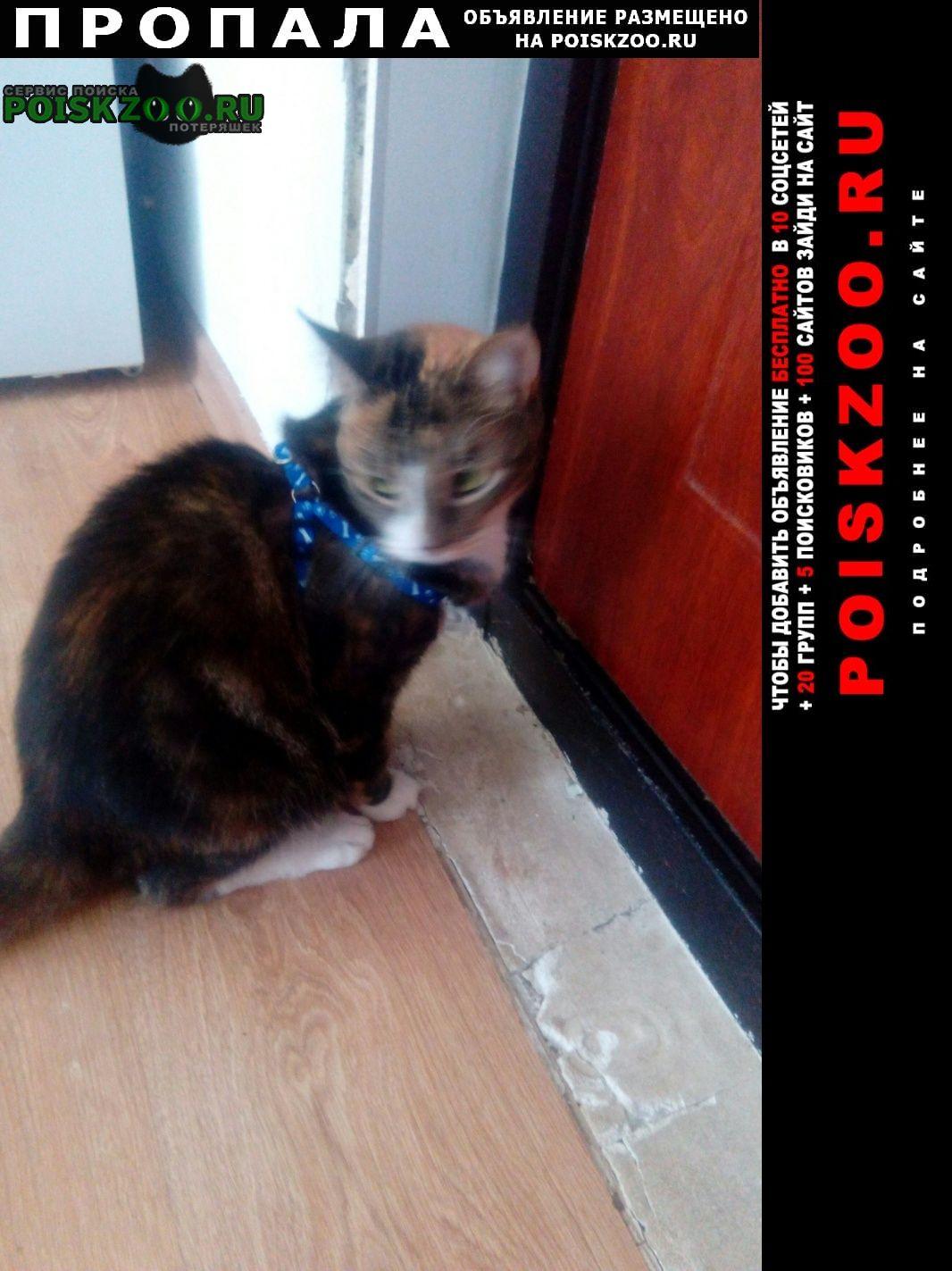 Пропала кошка Великий Новгород (Новгород)