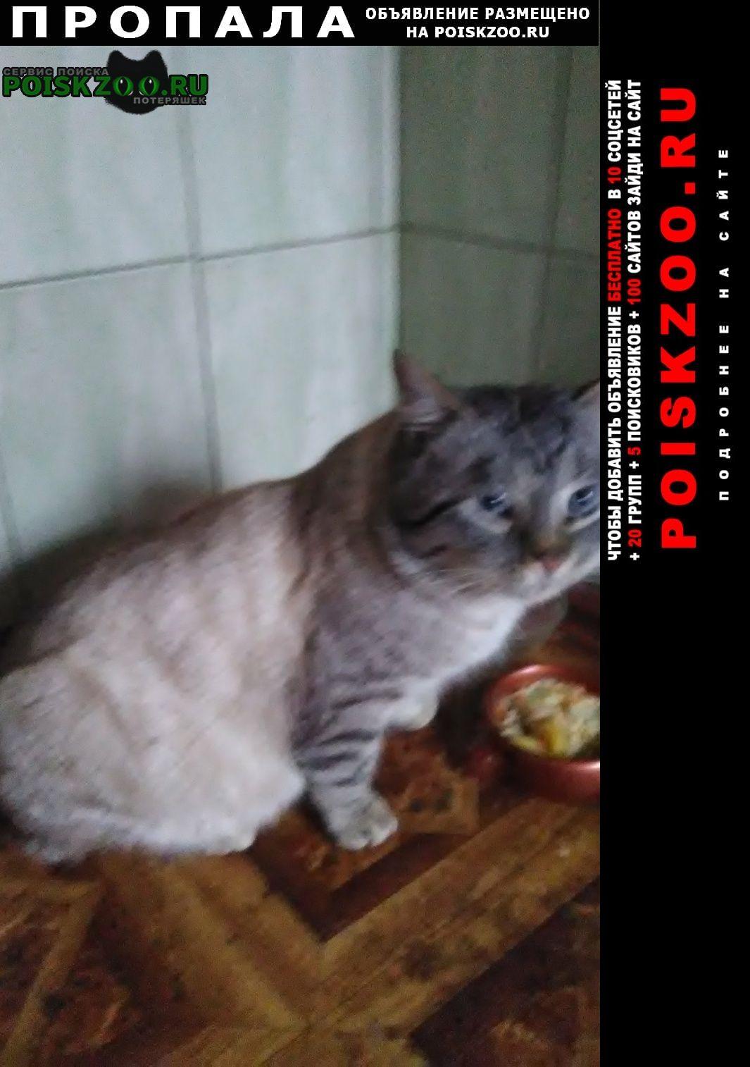 Пропала кошка. вп.янино1 Санкт-Петербург