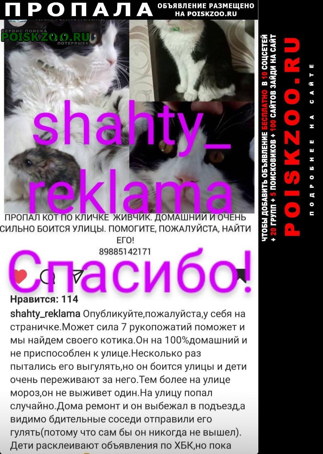 Пропала кошка район хбк Шахты