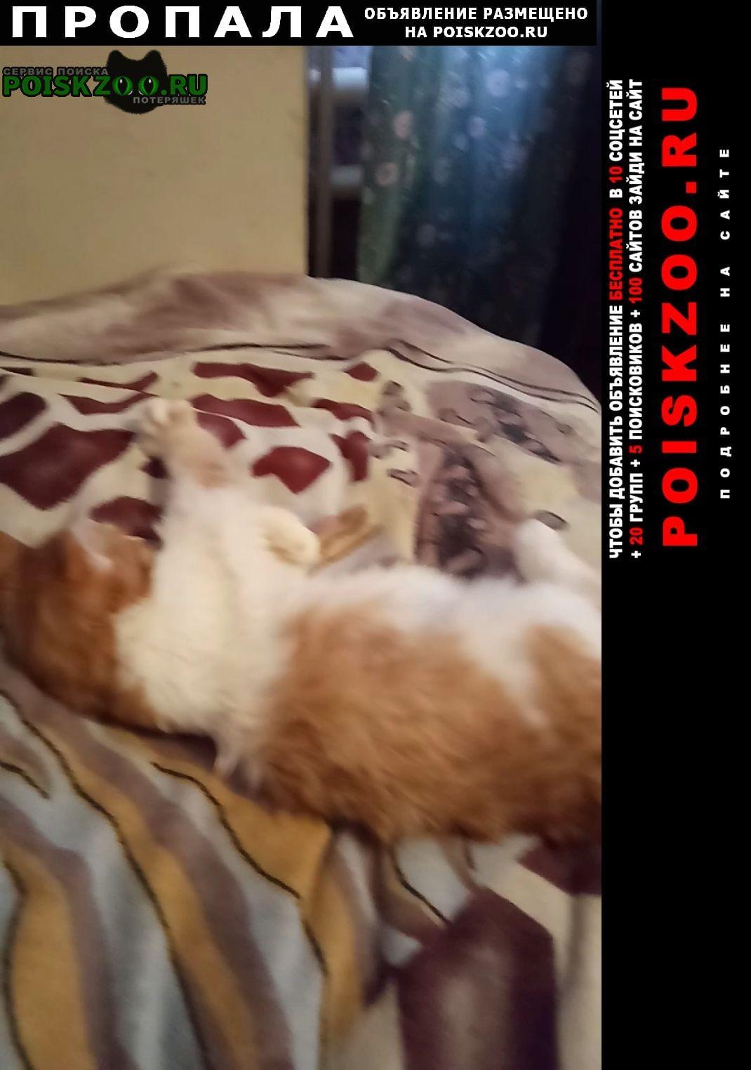 Пропал кот рыжий с белым Казань