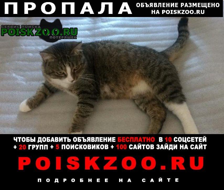Пропал кот барсик в районе выстовки Михайловск Ставропольский край