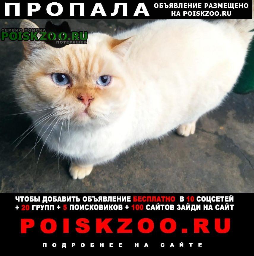 Пропал кот британский белый цвет с рыжой мордой Пятигорск