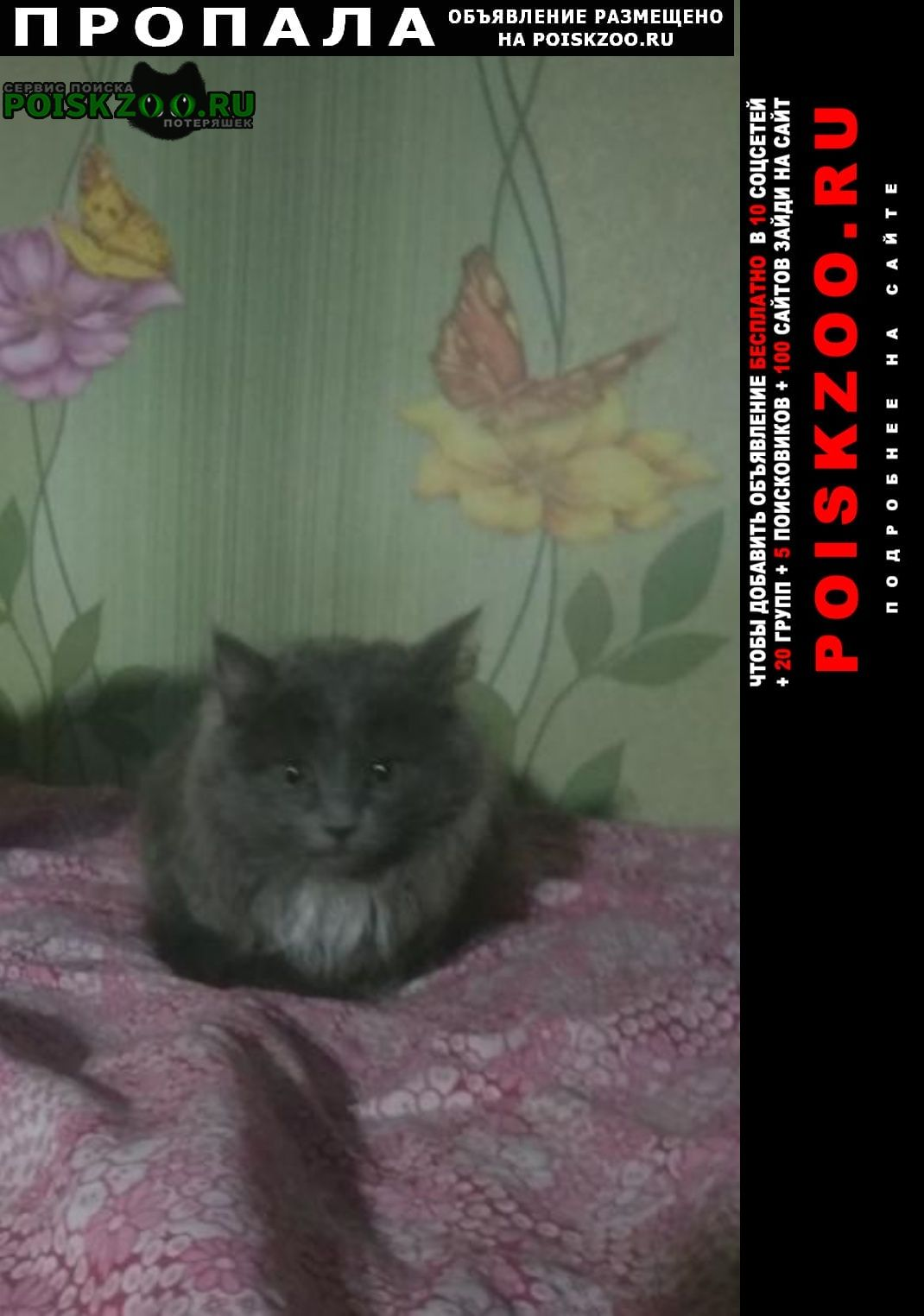 Пропал кот пожалуйста верните енка если взяли Чекмагуш