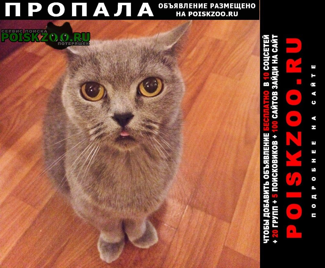 Пропала кошка Луганск
