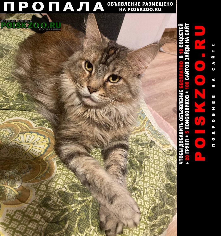Пропала кошка мей-кун Вырица