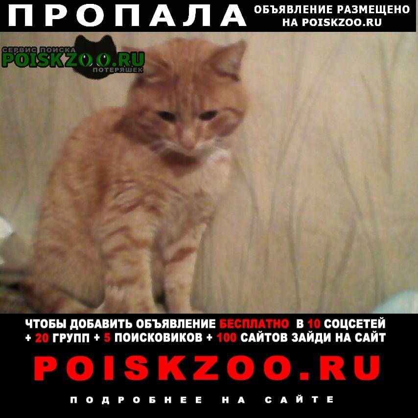 Пропал кот рыжий Саратов
