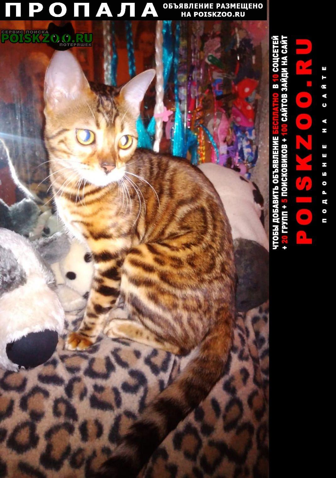 Пропала кошка Королёв (Юбилейный) (Московская обл.)