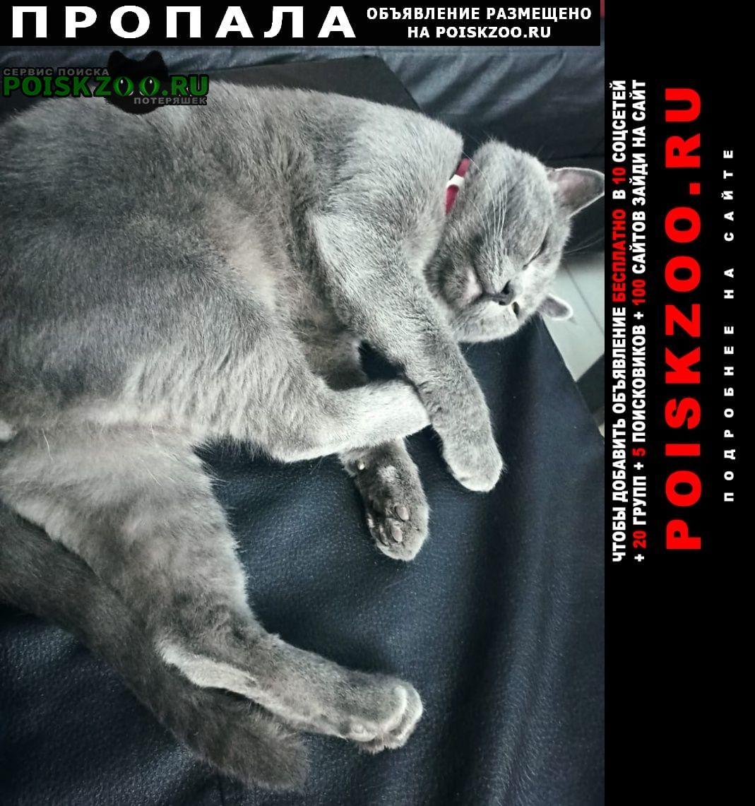Пропал кот Усть-Лабинск
