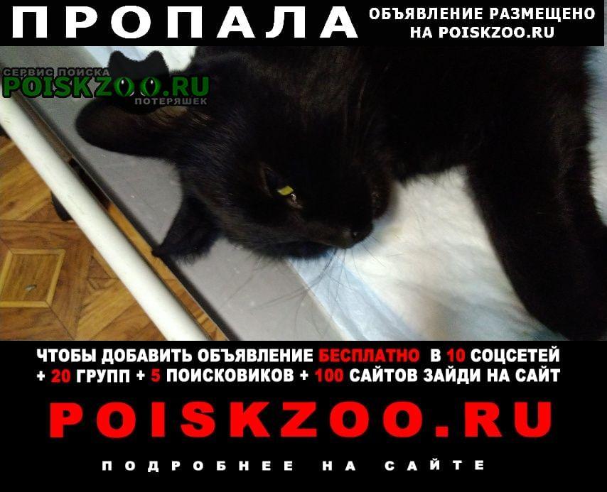 Пропала кошка черная Бронницы