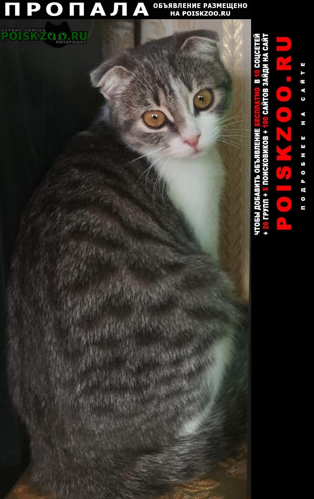 Пропала кошка метис вислоухой, 6 месяцев Краснодар