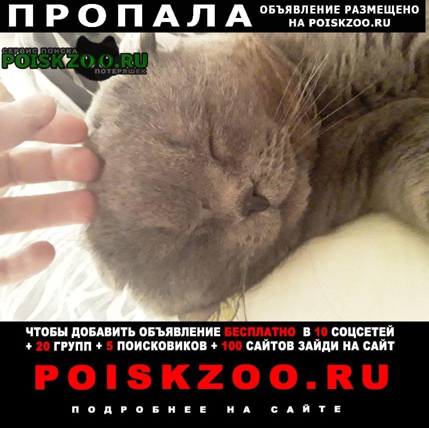 Пропал кот Батайск