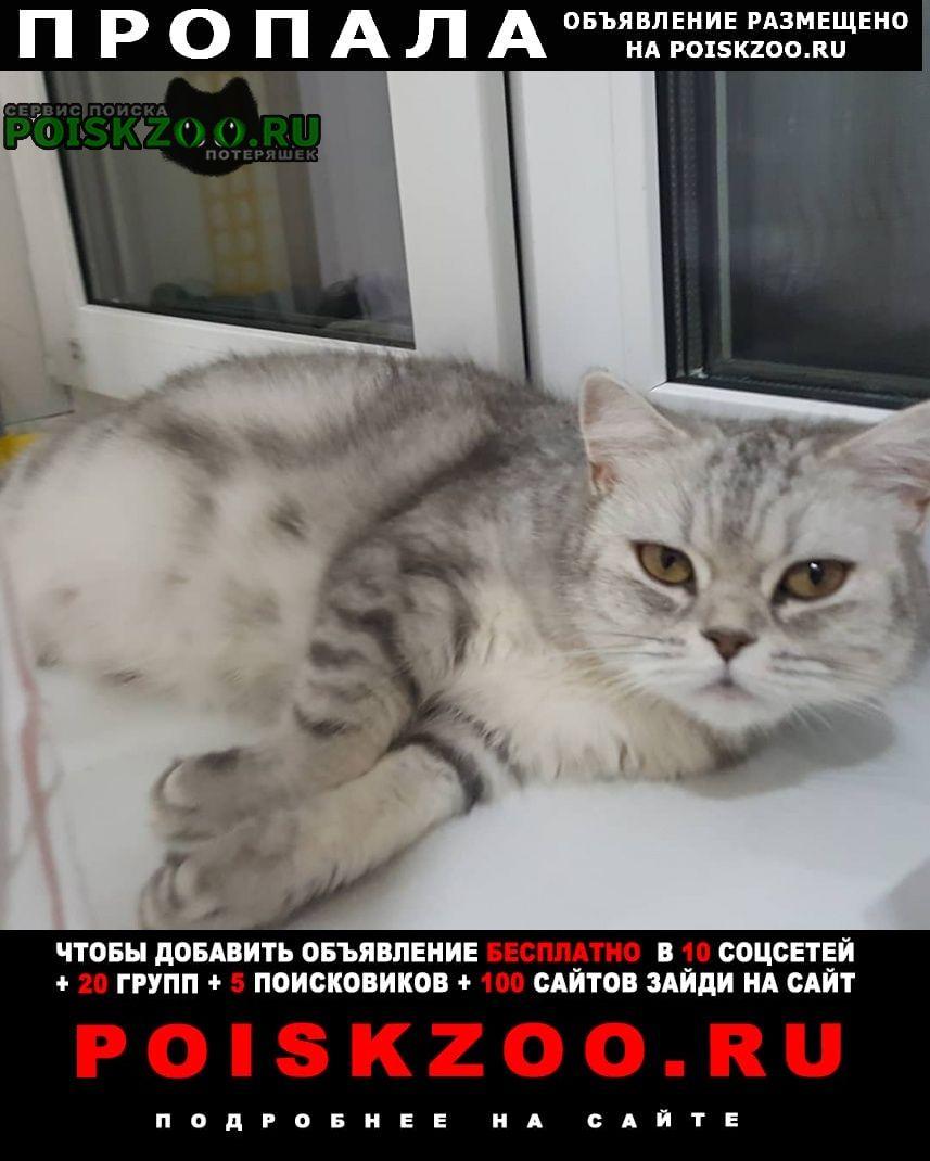 Пропала кошка Рассказово