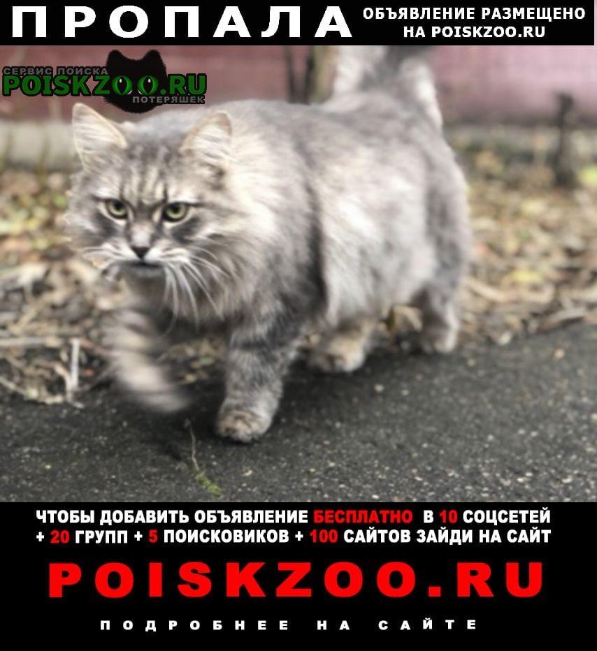Пропал кот. текстильщики. Москва