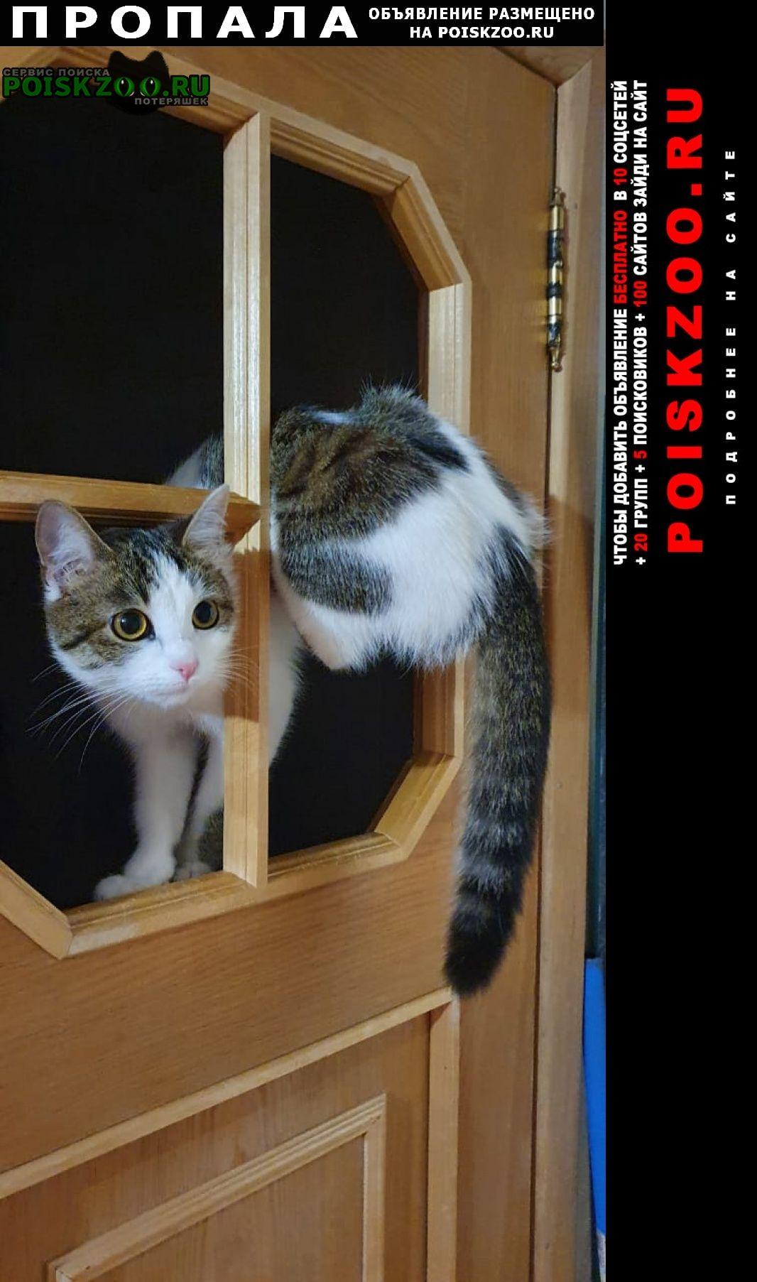 Пропала кошка Ростов