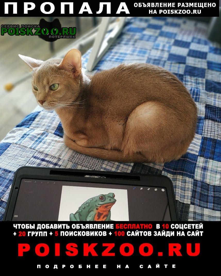 Пропал кот ждём дома Владивосток