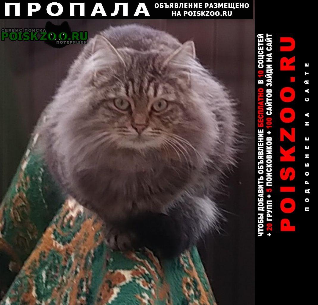 Краснодар Пропал кот