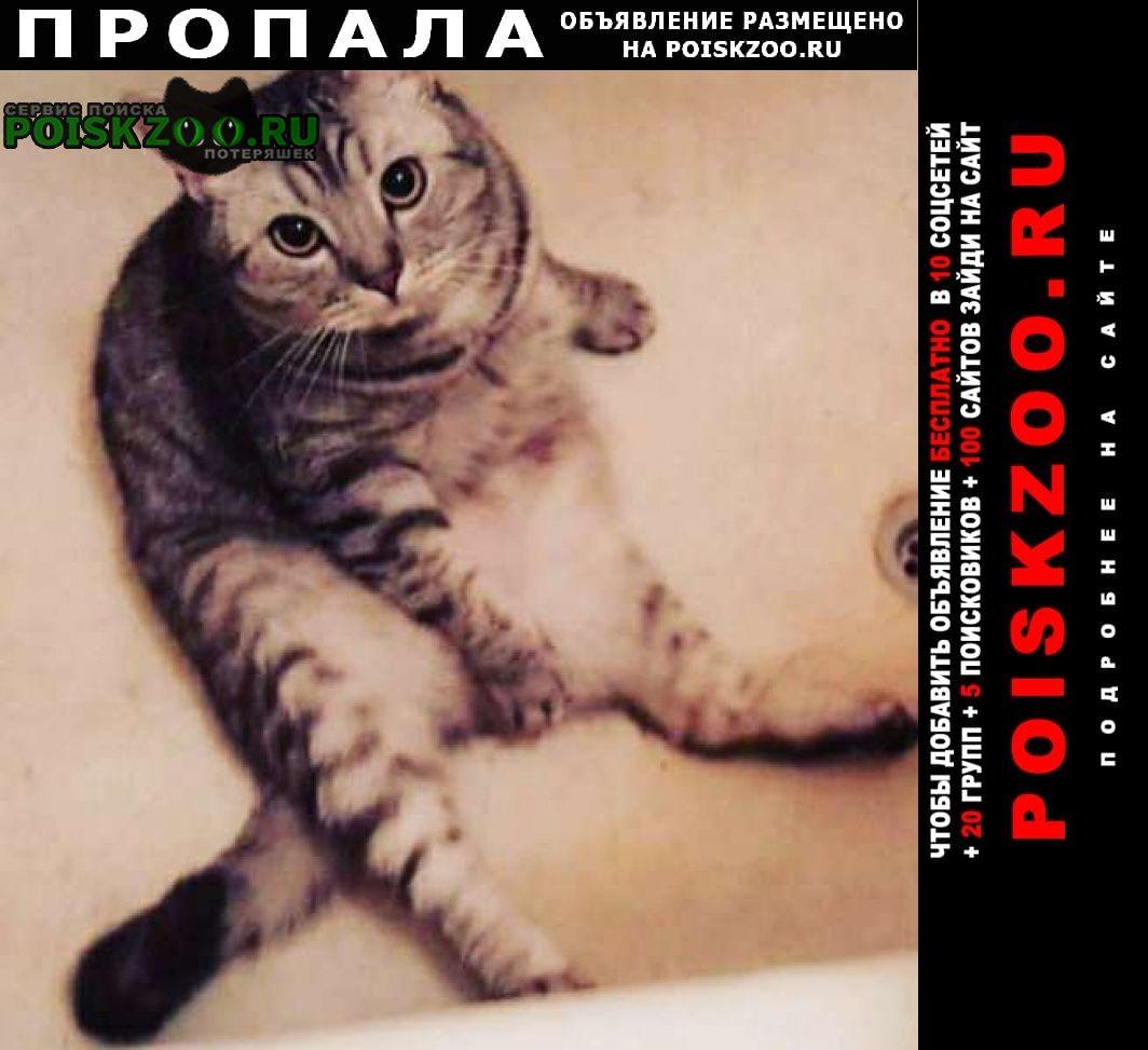 Москва Пропал кот мальчик, 3 года, выпрыгнул в окно