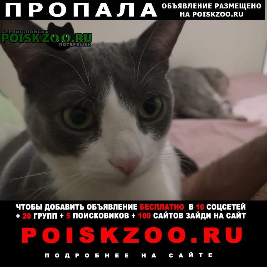 Пропала кошка 08.03 новое шоссе 10 кот Долгопрудный