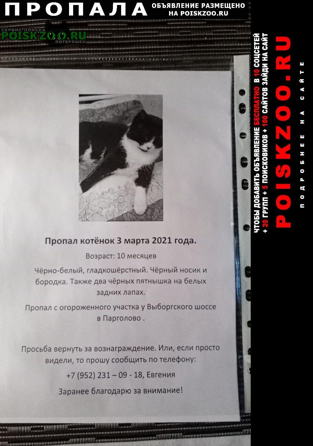 Пропал кот парголово Санкт-Петербург
