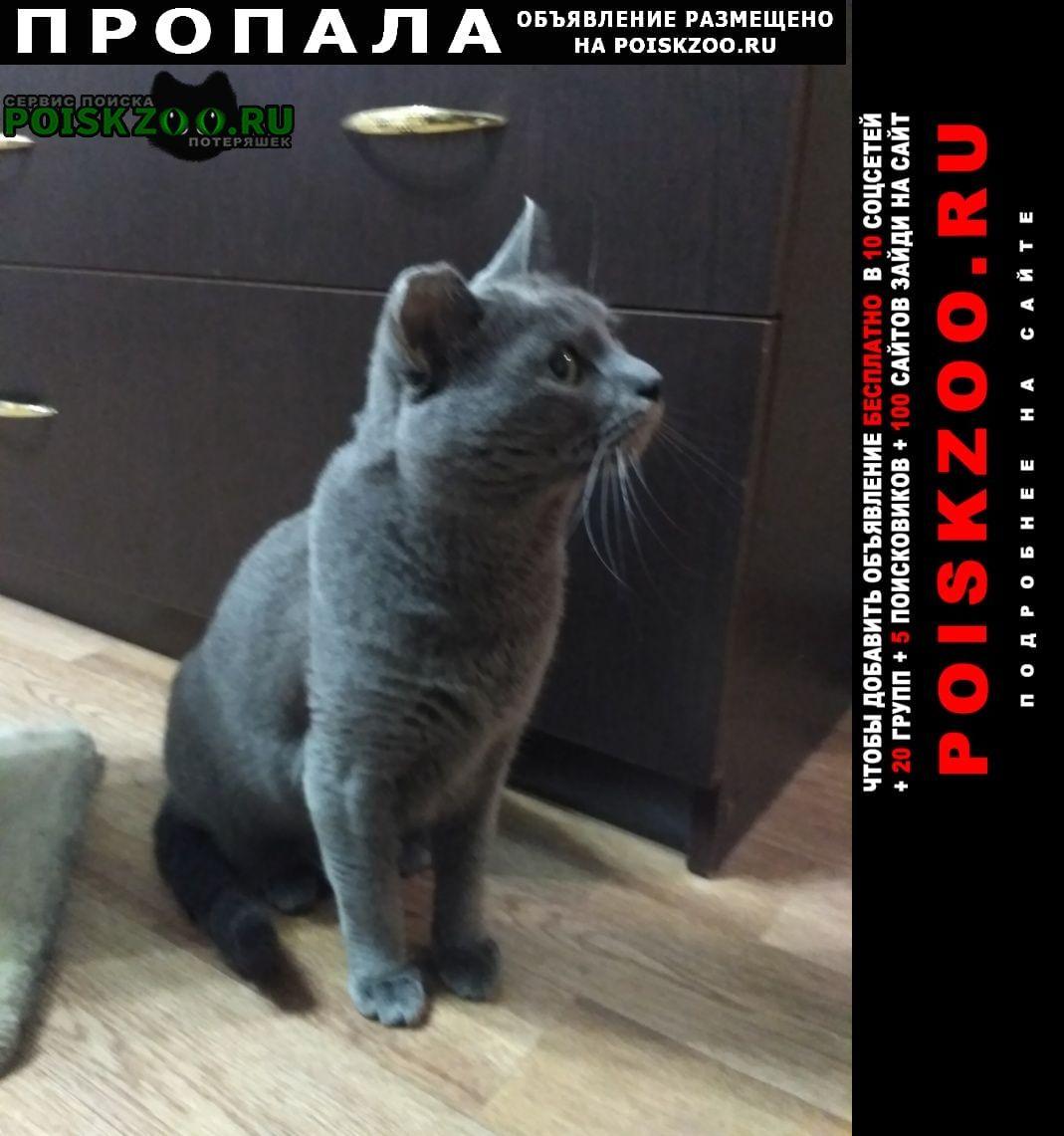 Пропал кот серый метро победы Самара